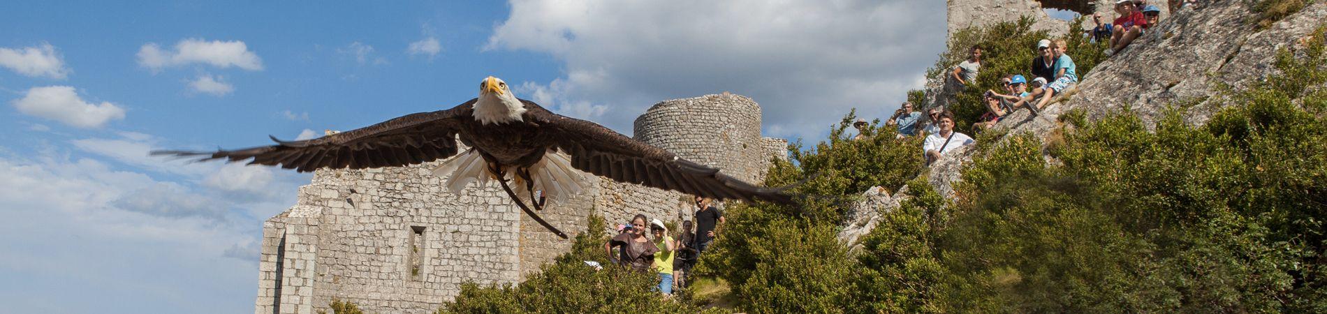 Le château Cathare de Peyrepertuse