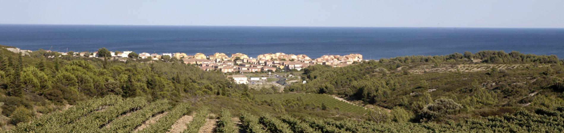 Les vignes de la région Languedoc-Roussillon